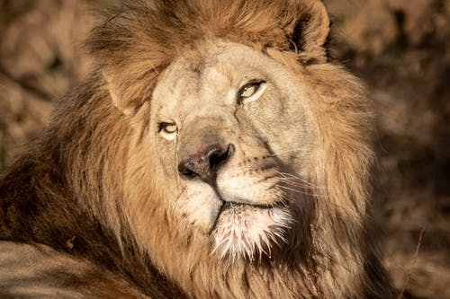 動物攝影, 南非, 危險 的 免费素材图片