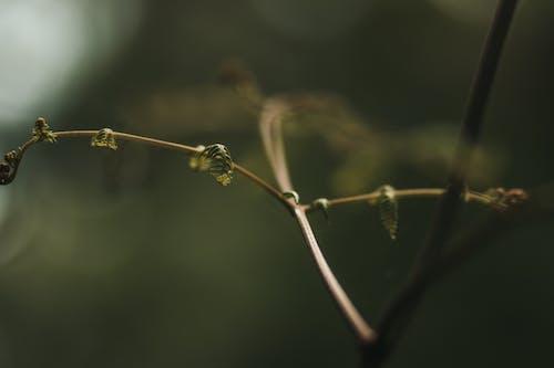 Free stock photo of bokeh, close-up, green