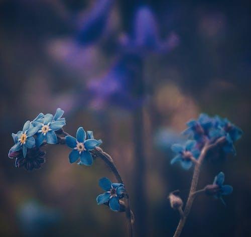 Gratis lagerfoto af abstrakt, blå, blå blomster, blad