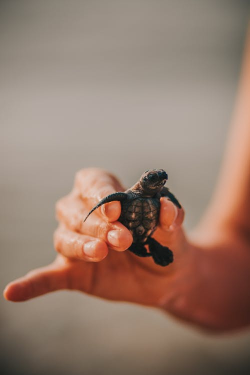 Black and Brown Turtle on Persons Hand