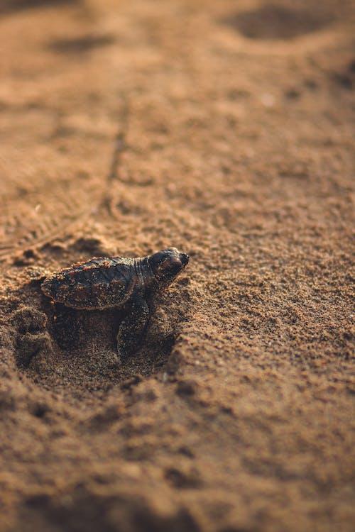 Brown Turtle on Brown Sand