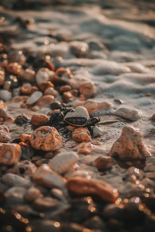 Brown and Black Turtle on Brown and Gray Stones
