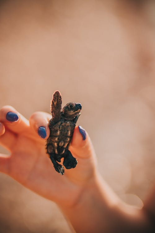 Brown and Black Turtle on Persons Hand