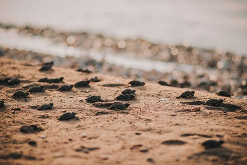 Black Stones on Brown Sand Near Body of Water
