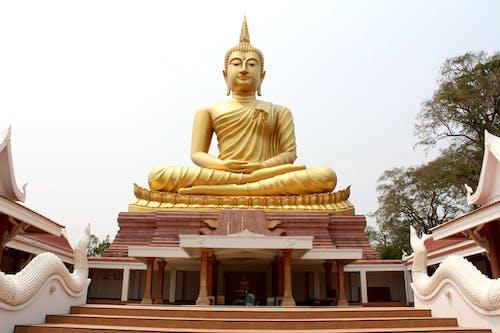 Photos gratuites de admirer, adorer, arbres, bouddha