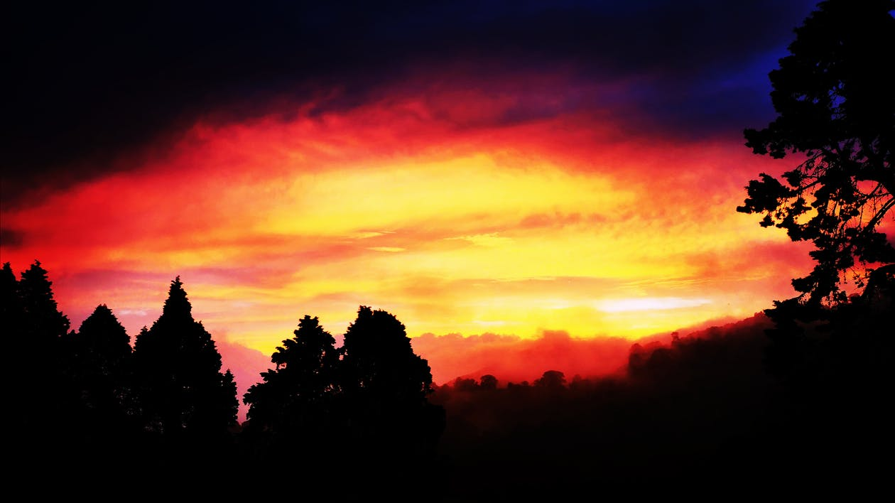 Free stock photo of dark, forest, sunset