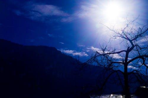 Ilmainen kuvapankkikuva tunnisteilla Intia, kirkas aurinko, lehdetön puu, mäet