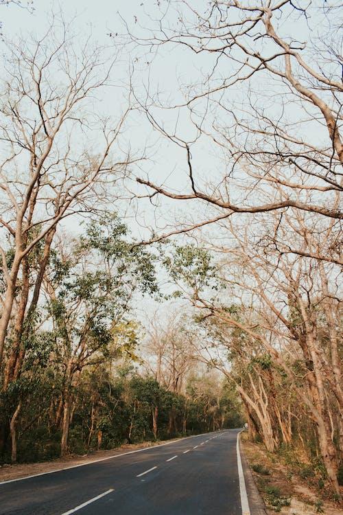 Ảnh lưu trữ miễn phí về bình minh, cây, chi nhánh