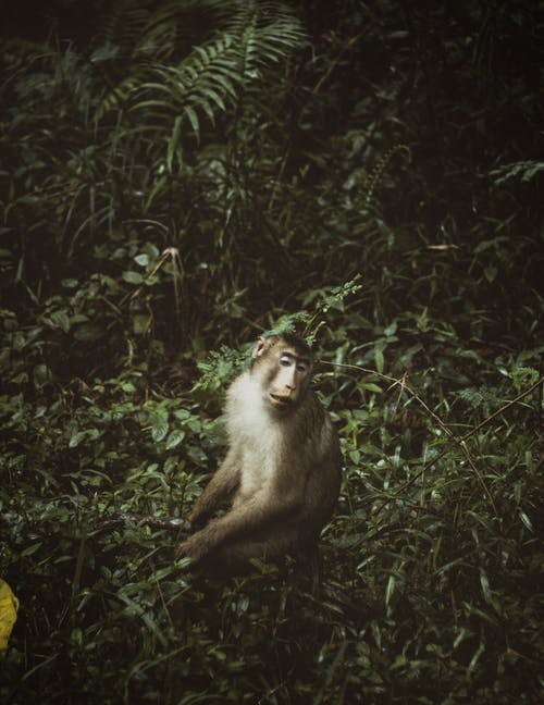 Gratis arkivbilde med dyrehage, primat, safari