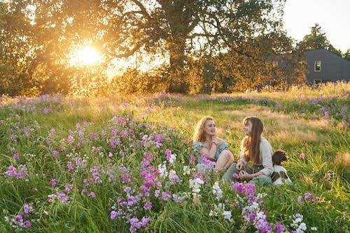Безкоштовне стокове фото на тему «безтурботний, дерево, дозвілля, Захід сонця»