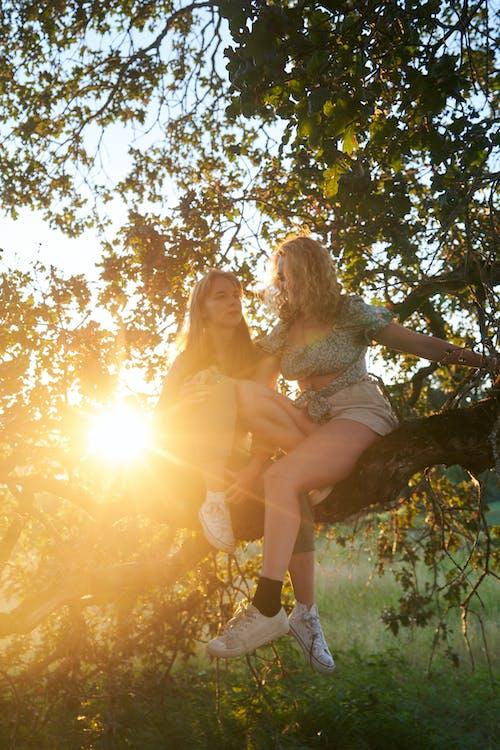Безкоштовне стокове фото на тему «веселий, дерево, Дівчина, дозвілля»
