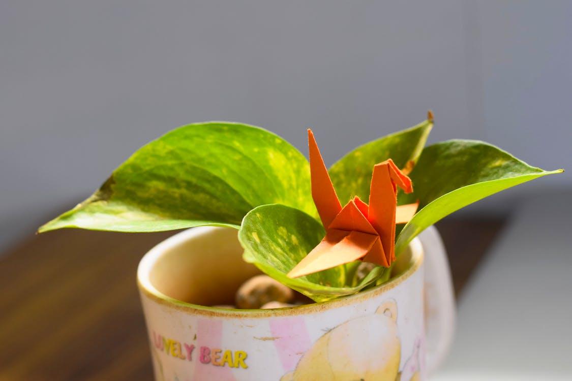Free stock photo of money plant, origami, paper crane