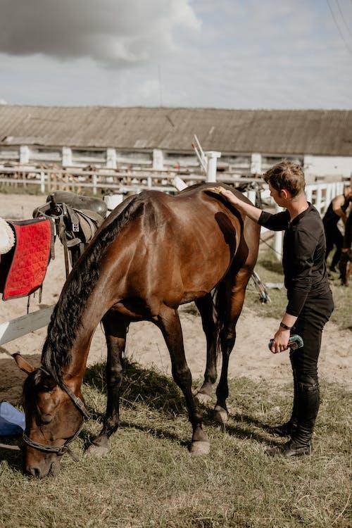 Man Grooming His Horse at the Ranch