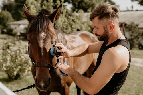 Guy Caring For a Horse