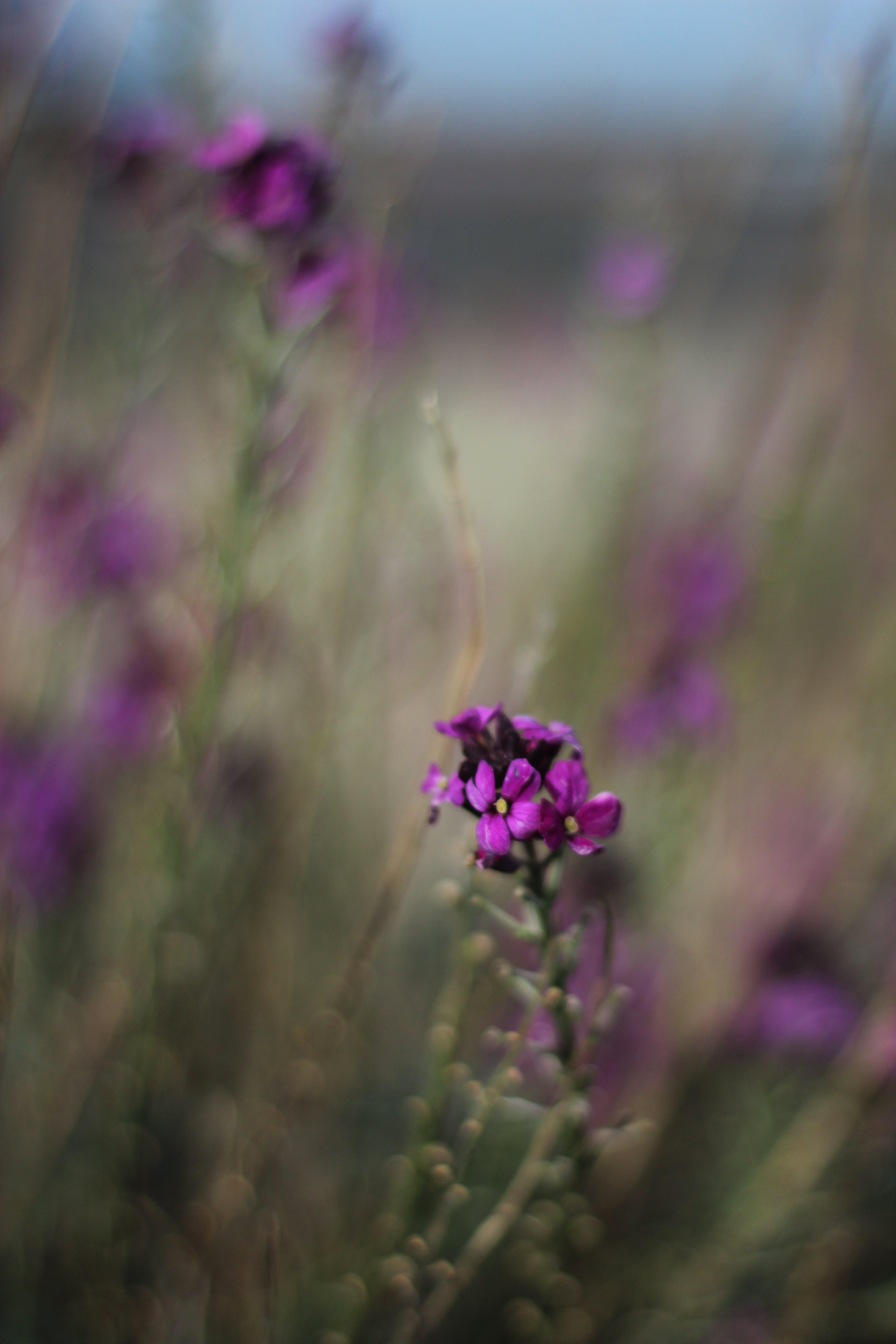 Free stock photo of wildflower