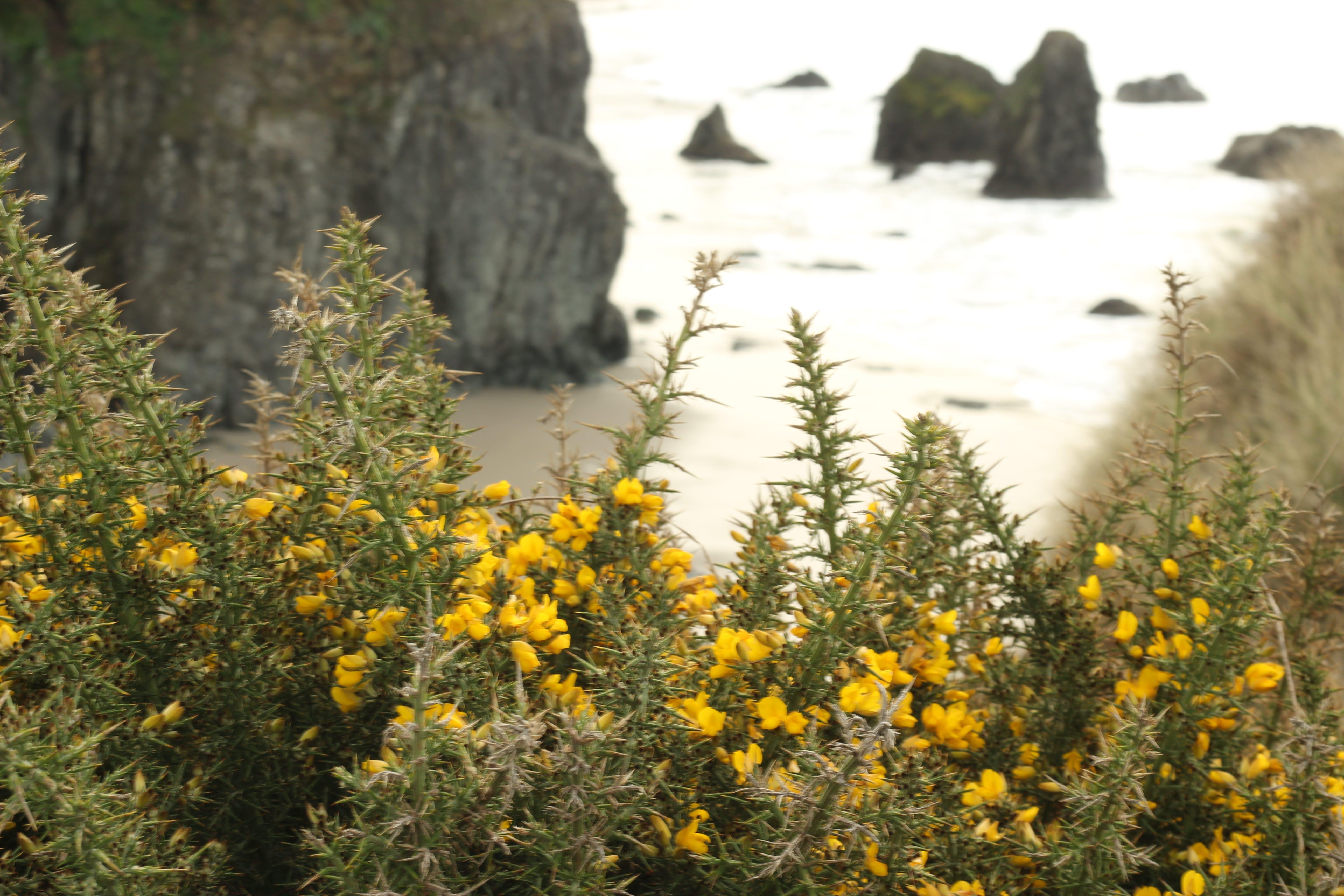Free stock photo of cliff coast, wildflower, coastline