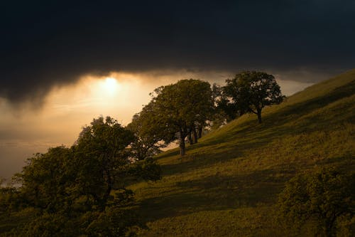 Picturesque view of green hill slope with lush trees beneath dark cloudy sky on overcast evening