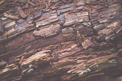 Ingyenes stockfotó fahasáb, farönk, károsodott témában