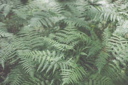 Close-Up Shot of Ferns