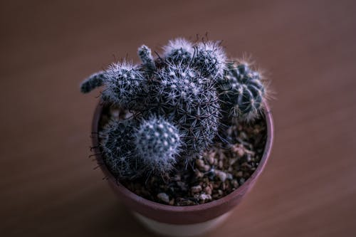 A Cactus Planted in a Pot
