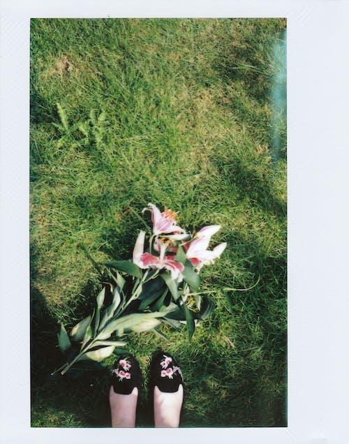 Immagine gratuita di bellissimo, colore, erba, esotico