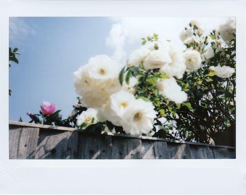 Immagine gratuita di amore, bellissimo, bouquet, colore