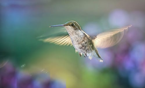 Immagine gratuita di acqua, animale, colibrì, colorato