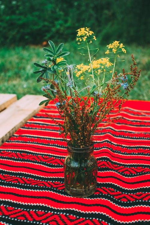 Imagine de stoc gratuită din anotimp, arbore, aromat, copac