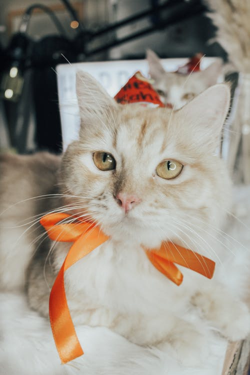 Orange Tabby Cat With Red Ribbon