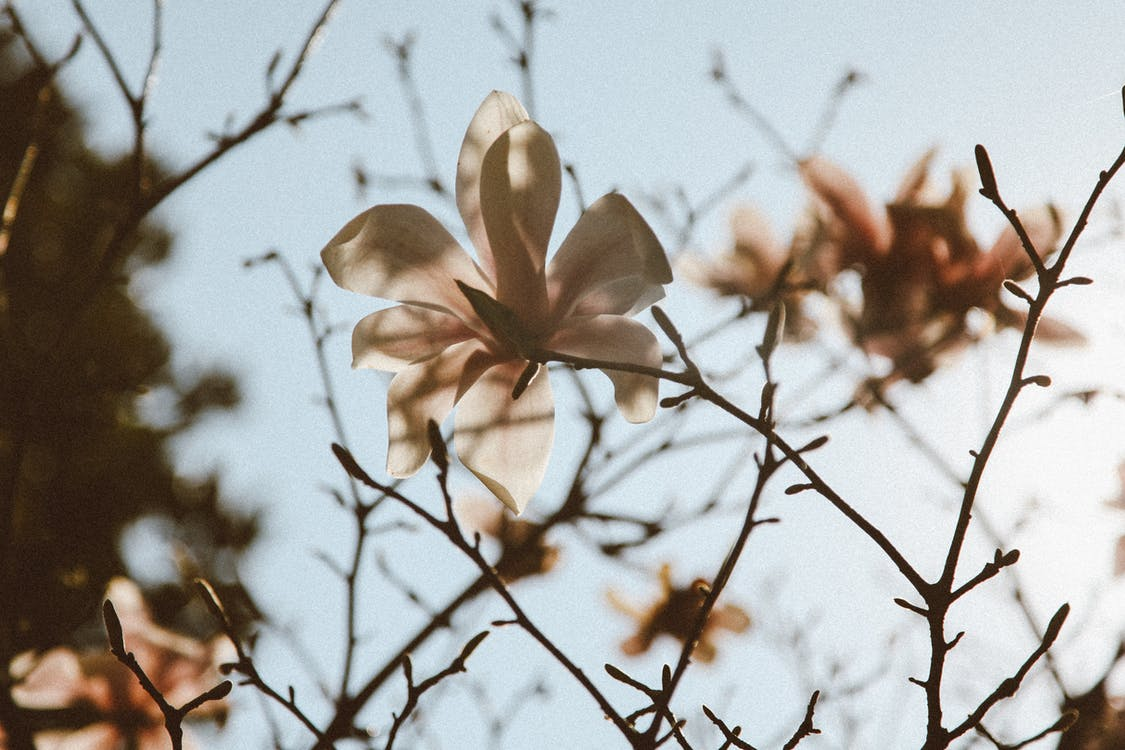 Low angle of blooming white flower with delicate petals growing on tree in park