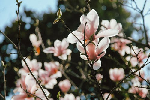 Shiny blooming flowers on tree in garden