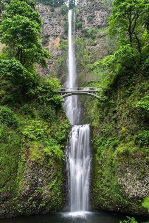 Foto d'estoc gratuïta de aigua, cascada, corrent, exuberant
