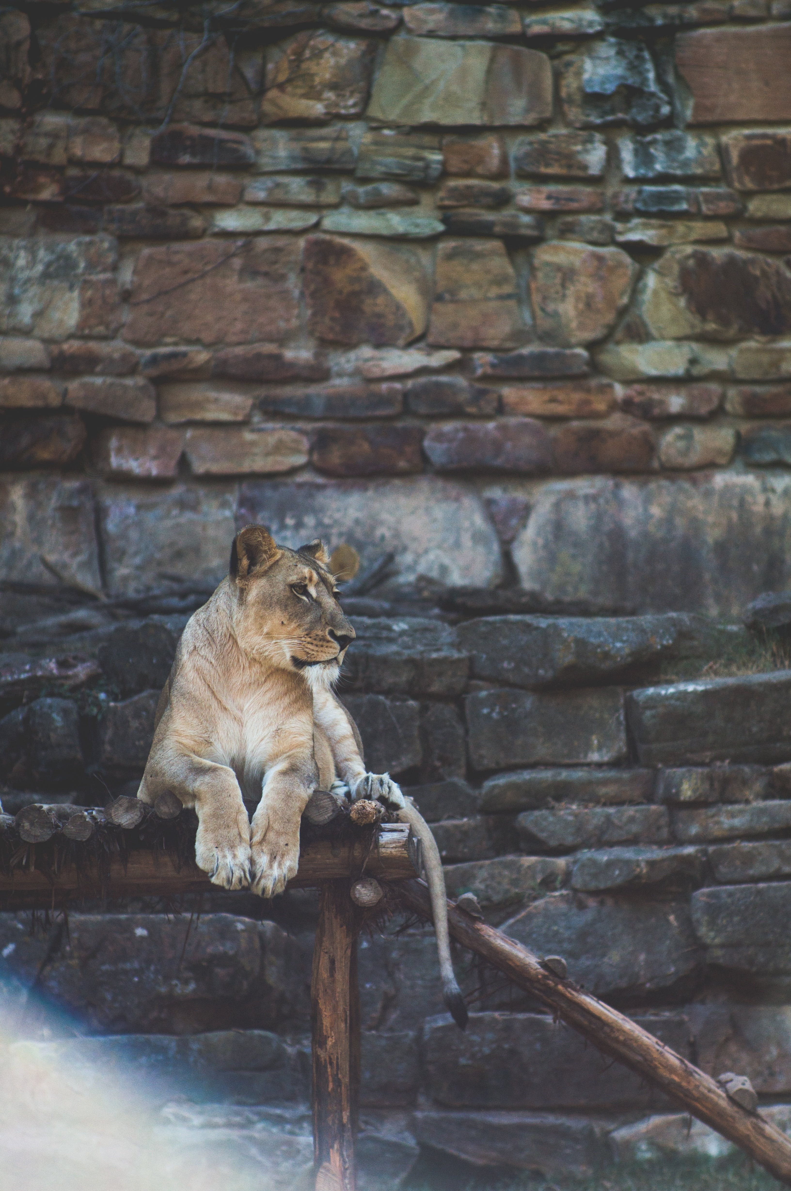 Brown Tiger Sitting on Gray and Brown Rock Formation at Daytime