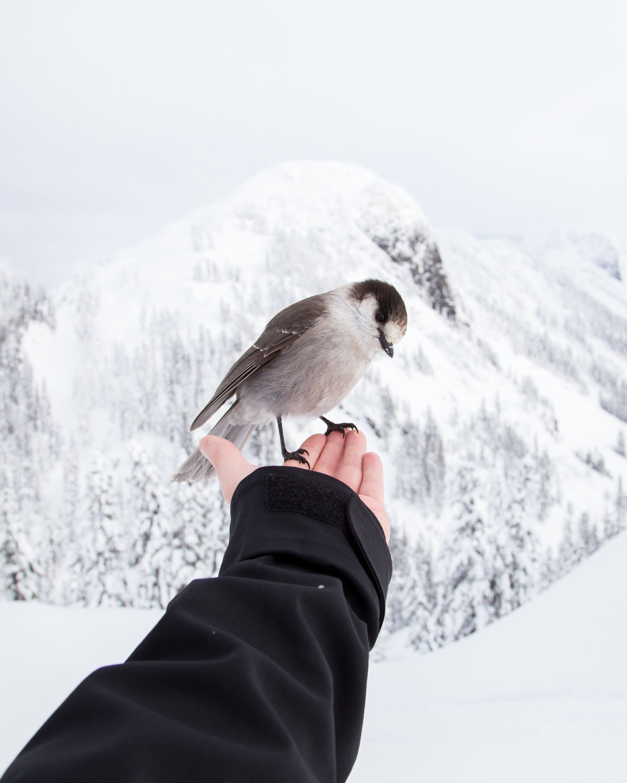 Free stock photo of animal, bird, freedom, hand