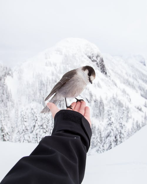 Brown Bird On Person's Hand