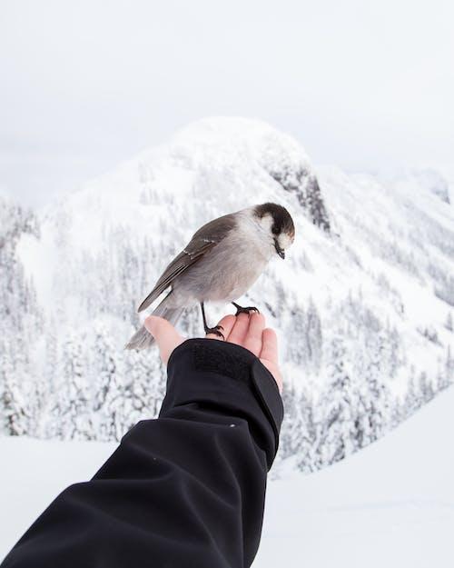 감기, 겨울, 눈, 동물의 무료 스톡 사진