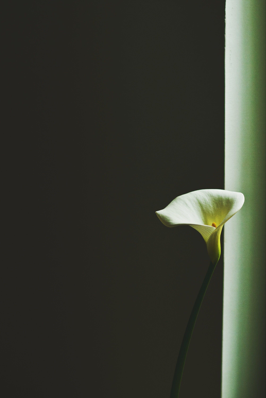 Free stock photo of blossom, close up, flower, garden