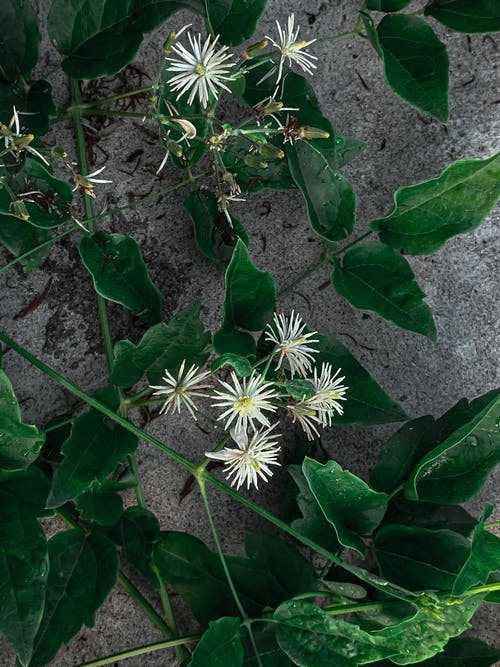 Gentle flowers with thin petals and green leaves