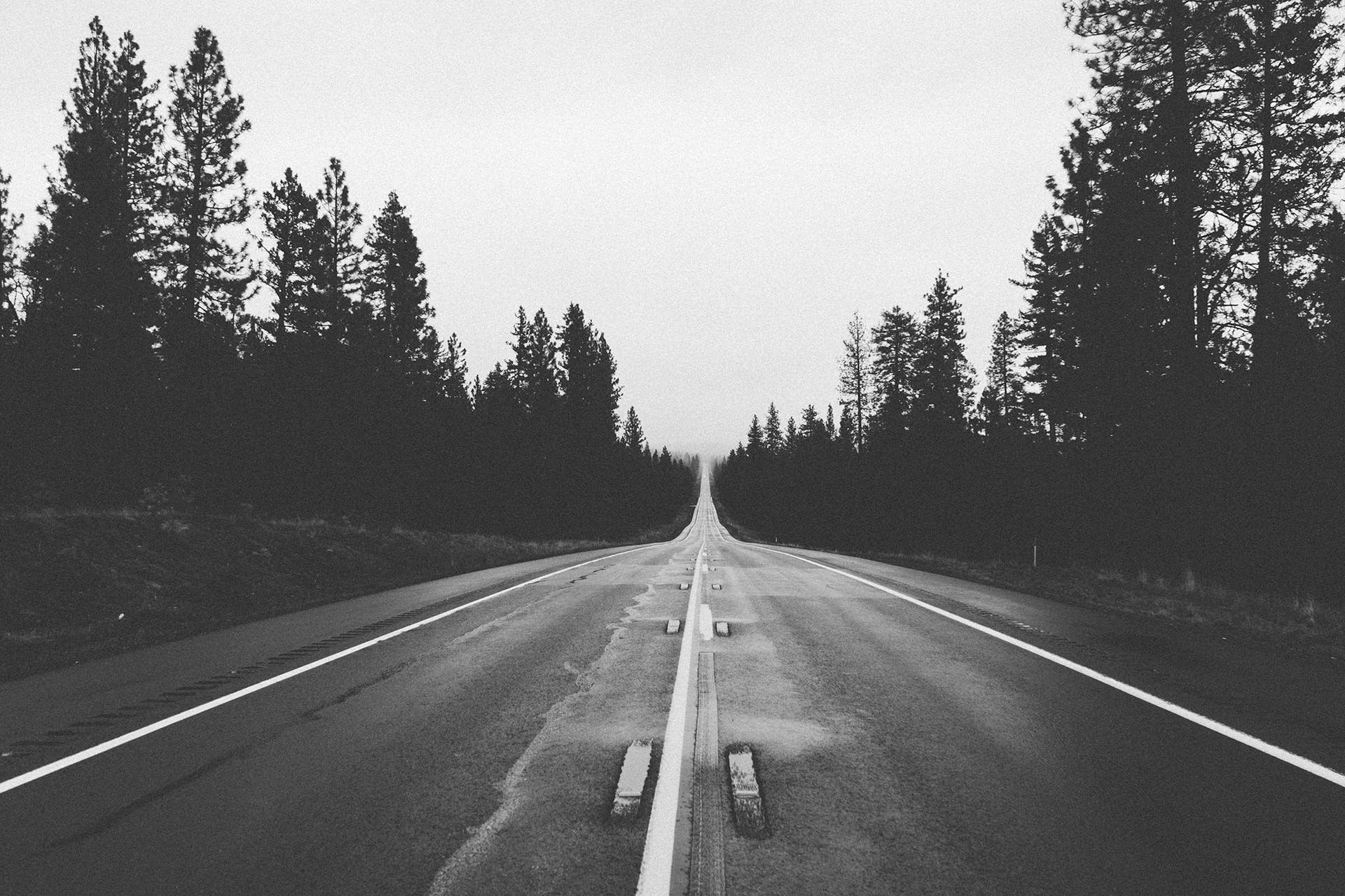 Grayscale Photography of Road Between Trees