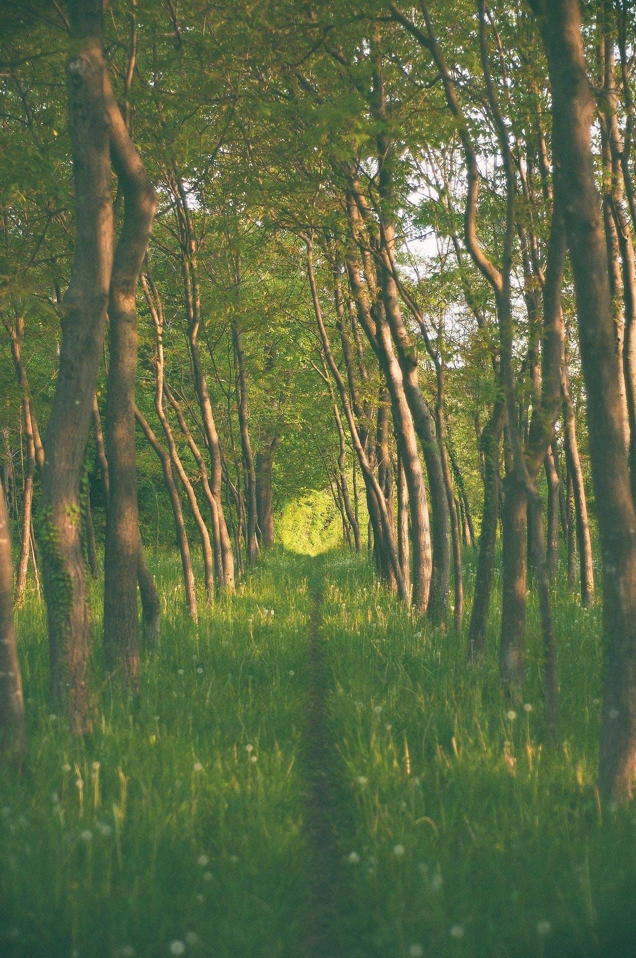 Free stock photo of wood, light, nature, summer