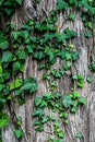 trunk, plant, leaves