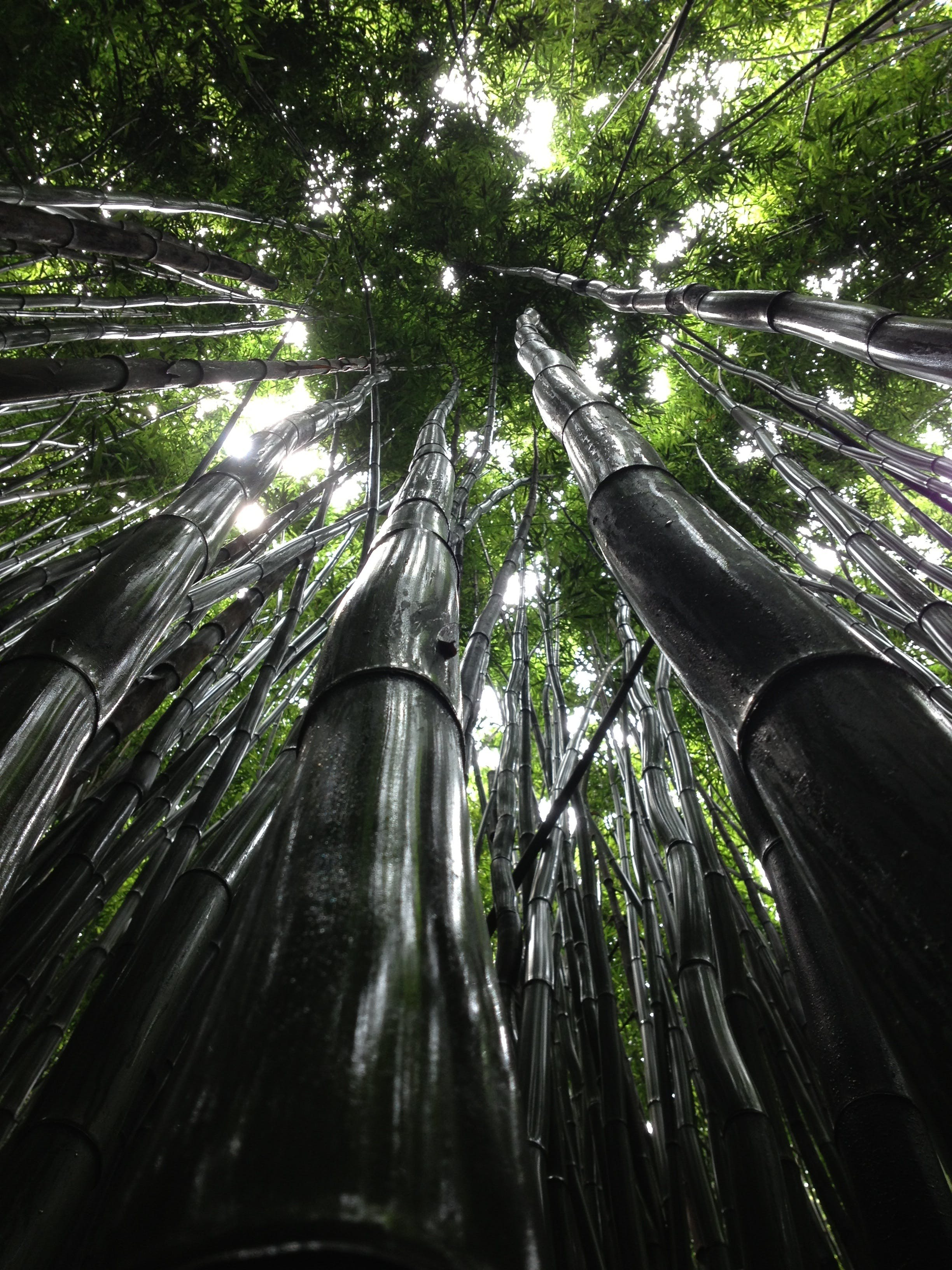 Under View Photo of Bamboo Trunks during Daytime
