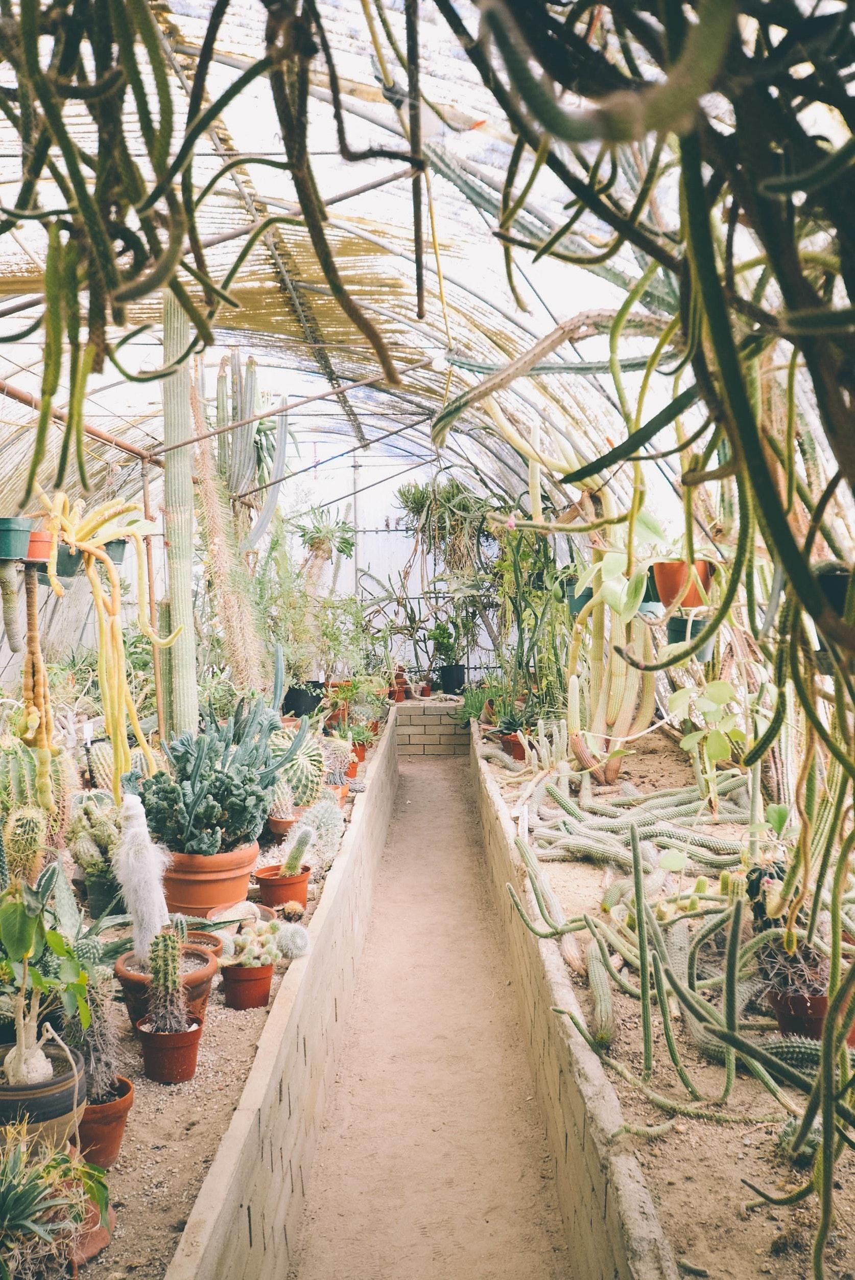 Kostenloses Foto Zum Thema Gewachshaus Kakteen Kaktus
