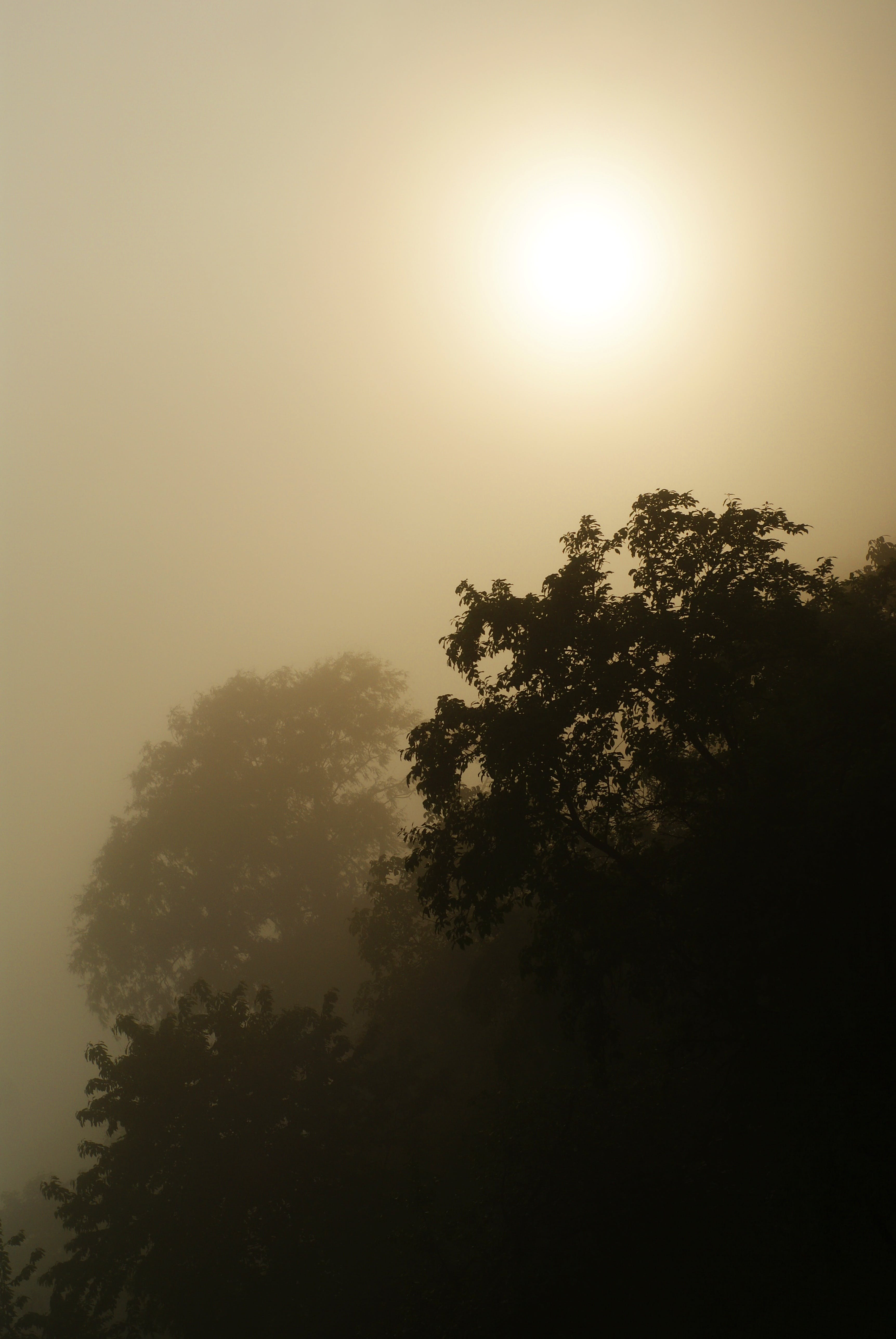 Free stock photo of sun, tree