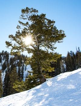 Free stock photo of snow, sun, winter, mountain