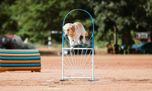 개, 게임, 경기, 공의 무료 스톡 사진