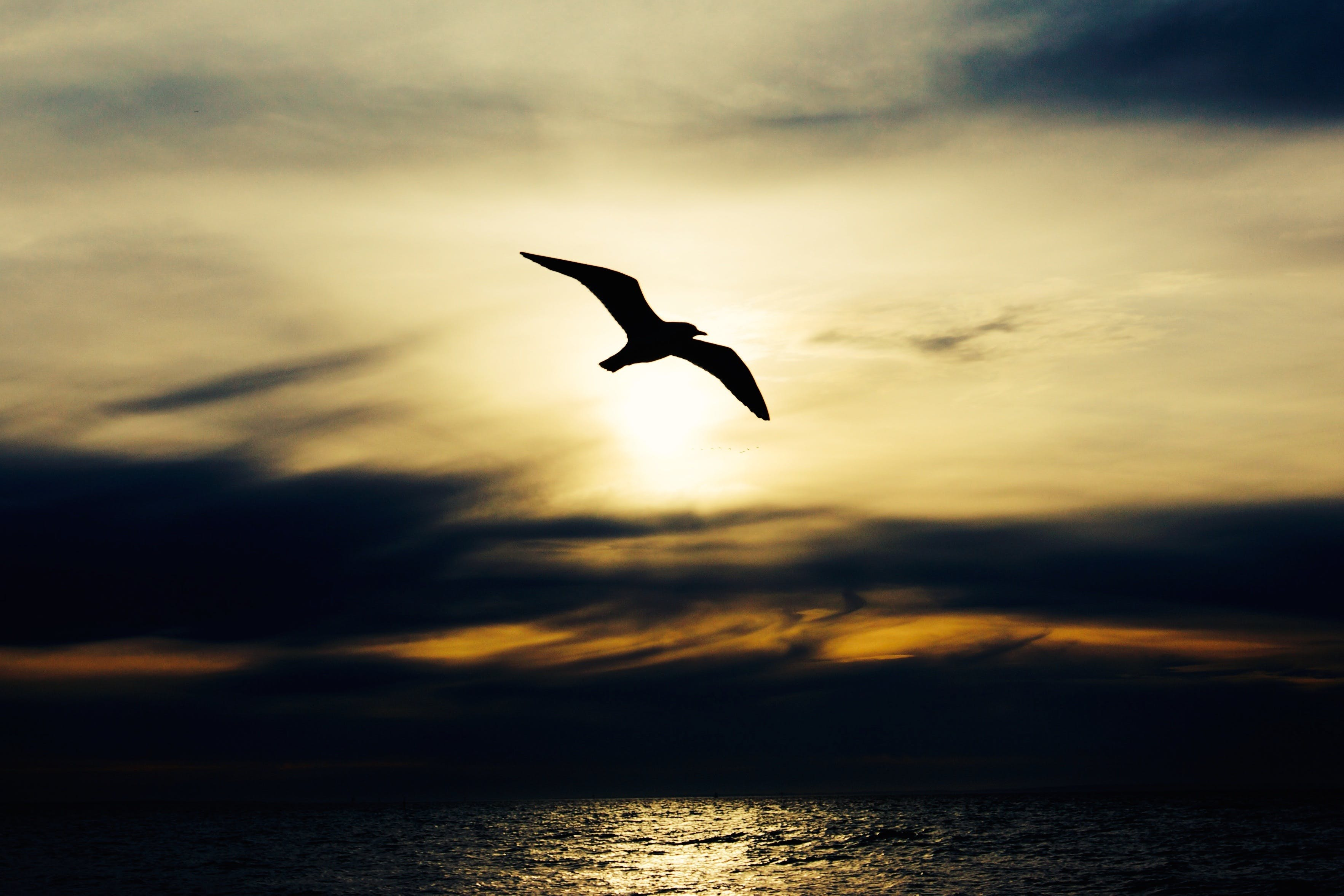 Free stock photo of sea, flight, nature, sunset
