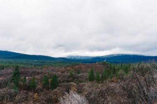 Darmowe zdjęcie z galerii z chmury, las