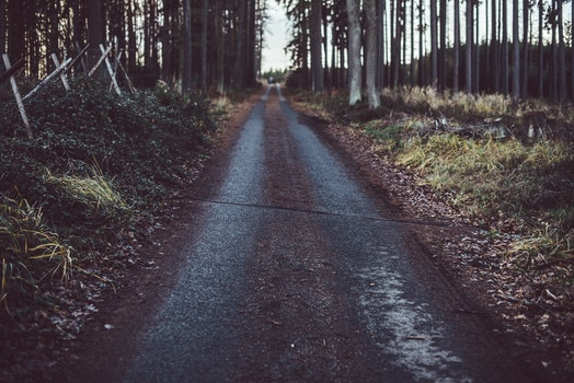 Free stock photo of road, street, forest, path