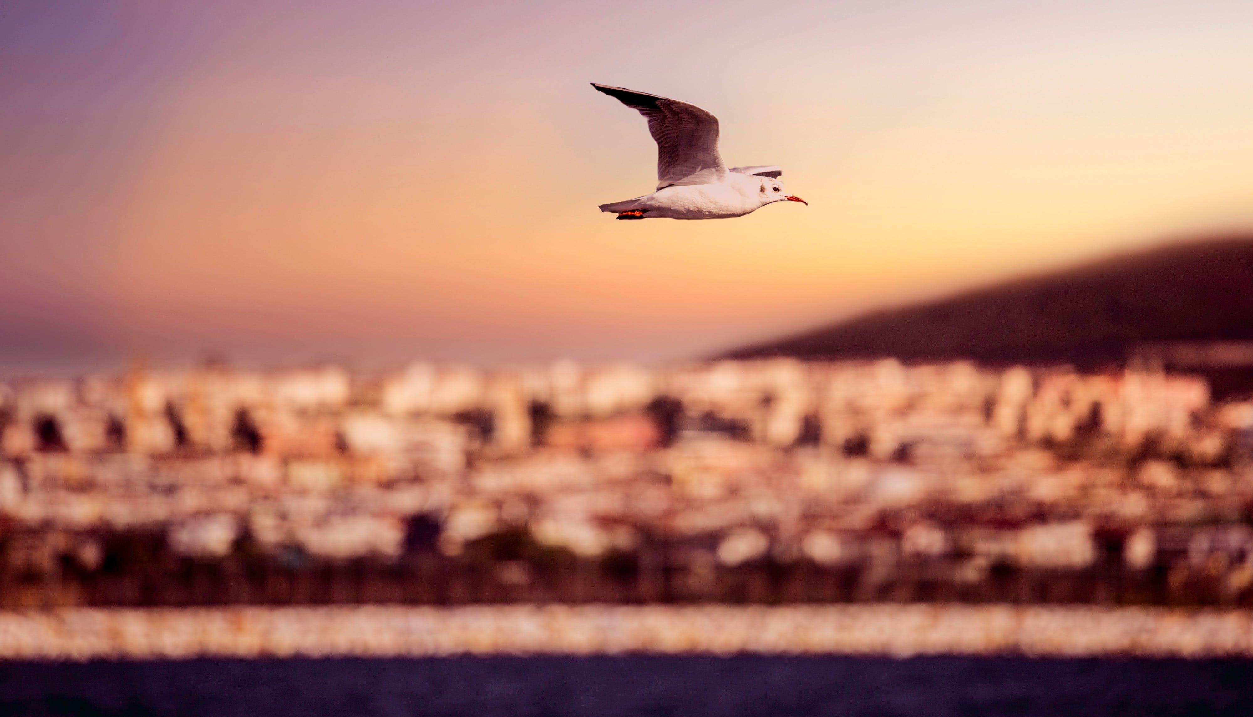 Free stock photo of sea, city, sky, bird